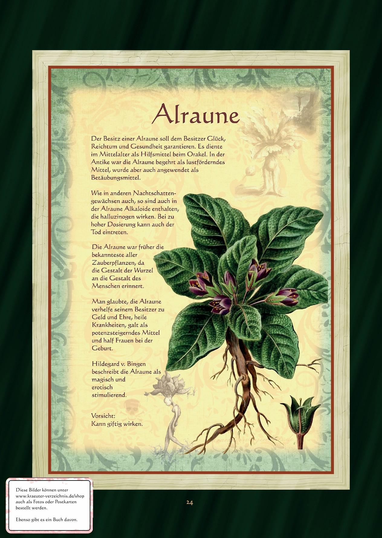 Alraune - Alraunetee
