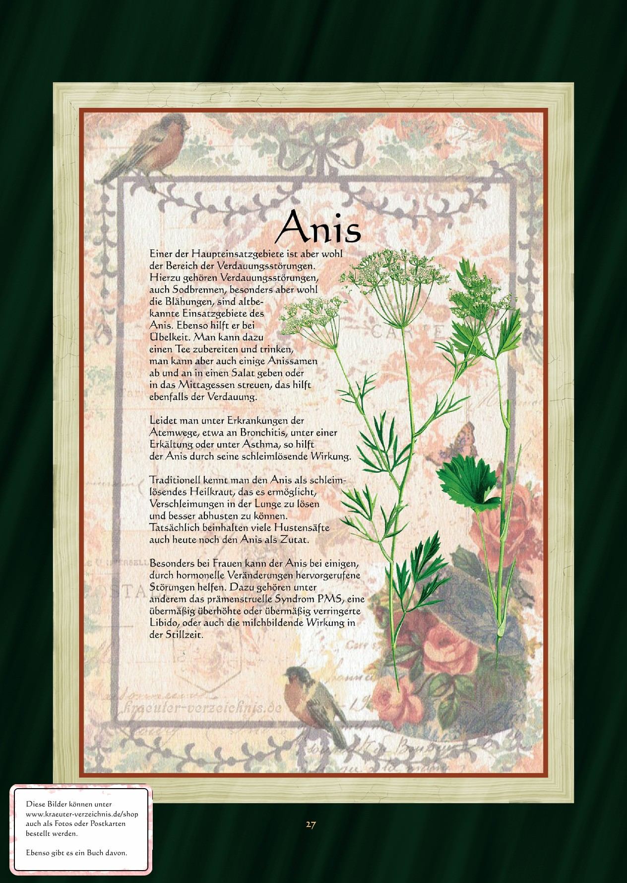 Anis Anistee