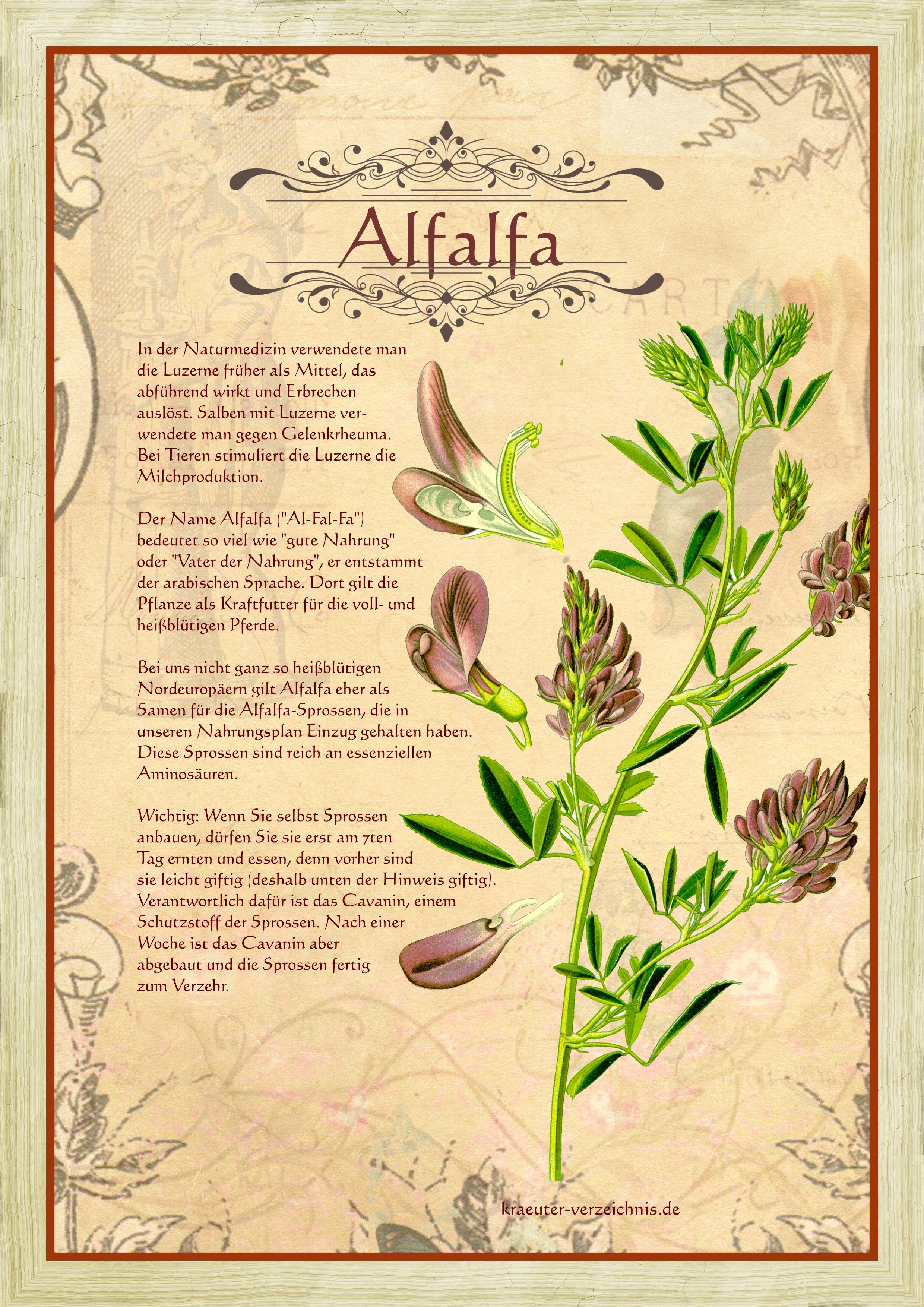 Fabelhaft Luzerne - Alfalfa @YF_94