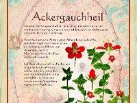 Buch Alte Heilkräuter-Zeichnungen